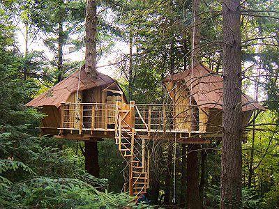 cabane-castor2