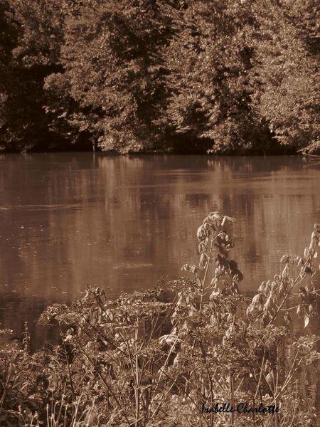 arbres eau