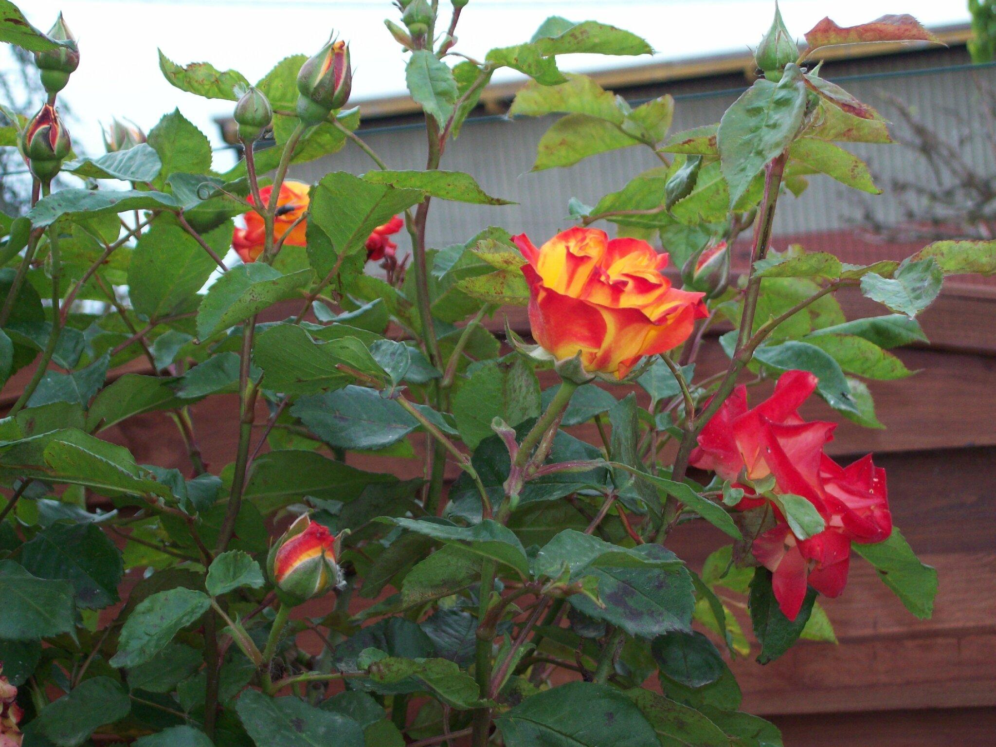 Vive le printemps dans mon jardin le blog de michelotte for Vive le jardin montaigu