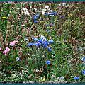 Prairie fleurie 1108157