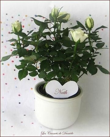 Roses blanches-1