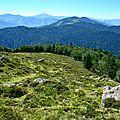 Sylve de hêtres aux confins du plateau du Soulaing...