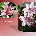 balanicole_2015_6_juillet_02_pink fantaisy1