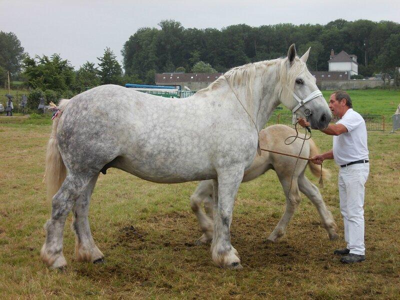 Radieuse du Boncoin - Concours National - 26 Juillet 2015 - 4e Suitées 8 à 10 ans