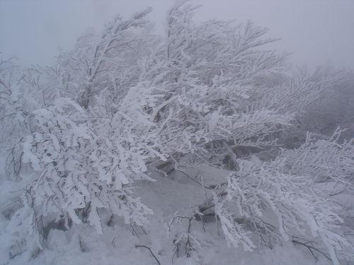2008 12 22 Le givre sur les arbres au Pilat