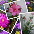 Les fleurs poussent