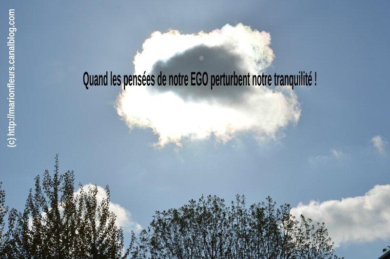 Ego, Fleurs de Bach, S