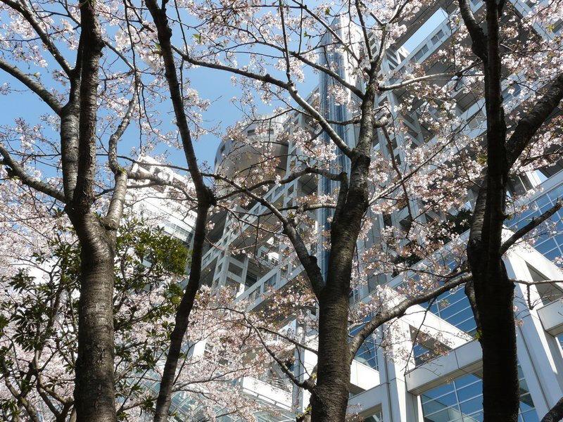 Canalblog Tokyo Cerisier 2010 Odaiba Fuji TV01
