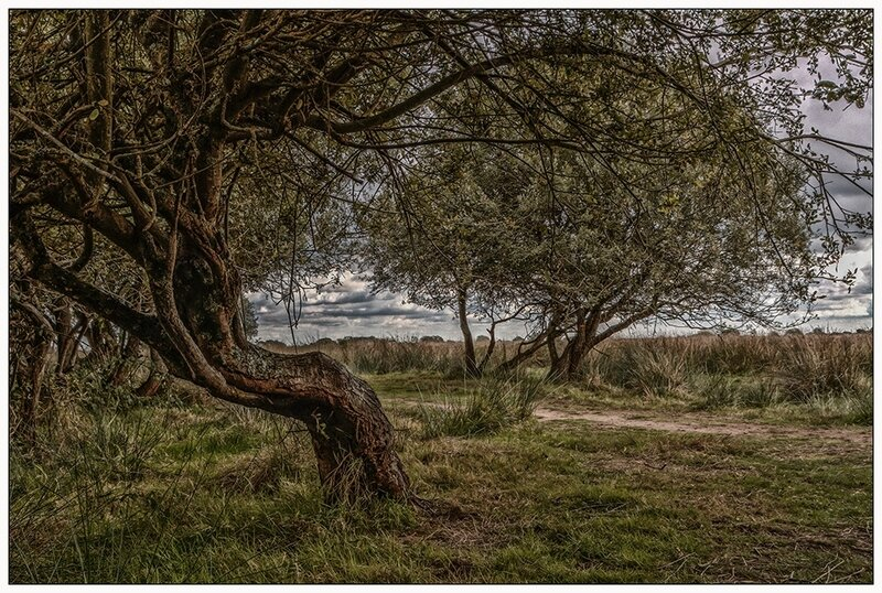 arbres1_web