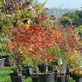 plantes en fête 0280026