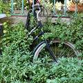 vélo feuillu_4306