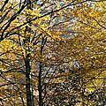 H�tres en automne...