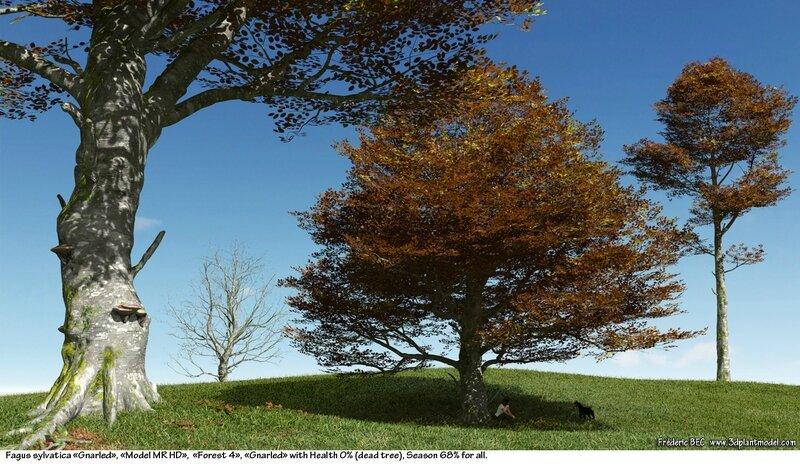 03 Fagus sylvatica beech tree 3d plant model factory 3ds cad max fbx obj autumn