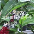 ferme aux papillons_326