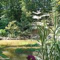 Un plan d'eau pour créer une biodiversité