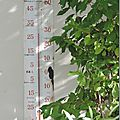 Windows-Live-Writer/Dams-mon-jardin_C73C/DSCN1344_thumb