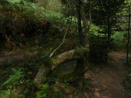 broceliande_1703 (2)