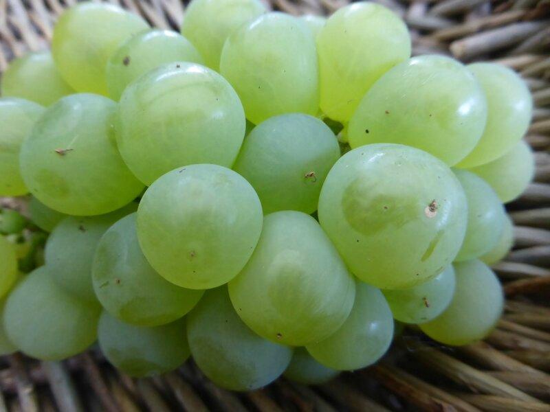 21-raisin (1)