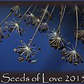 Seeds of love 2015