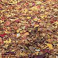 Dimanche d'automne...