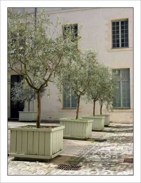 Angers_61_W