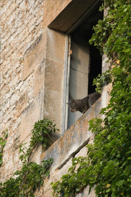 ville chat martinet 280516 1