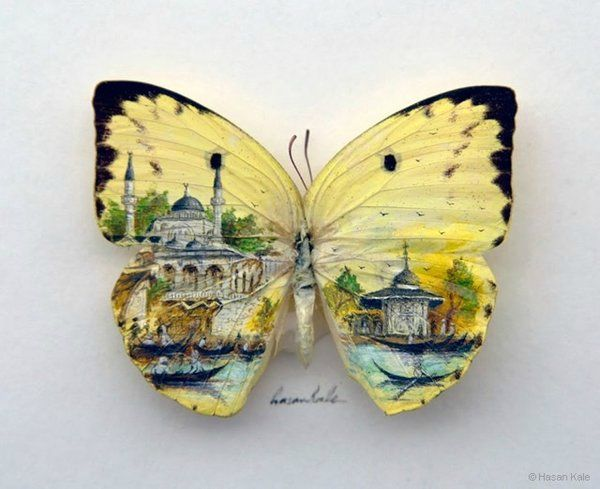 Papillon-2[1]