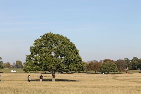 richmond park (35)