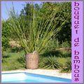 bouquet de bambous