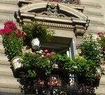 fenetre_fleurs