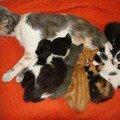 2008 04 22 Papillon et les chatons qui tètent