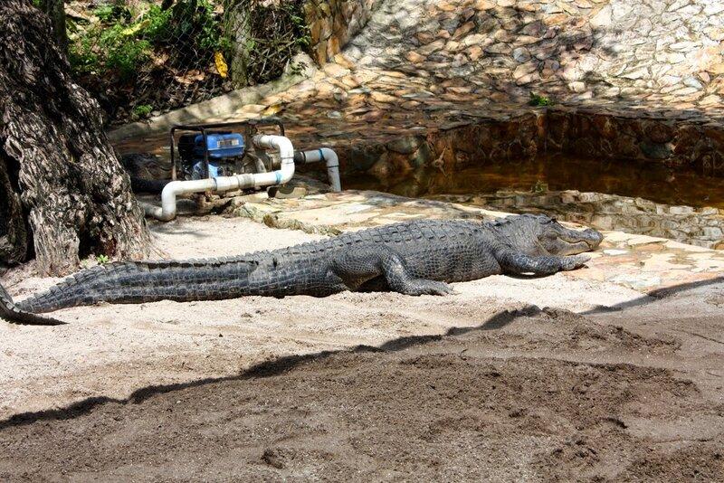 J24 - 21 juillet 2014 Everglades (183).JPG