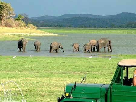 Minneriya_National_Park_Elephants_Sri_Lanka_Vision_Lanka