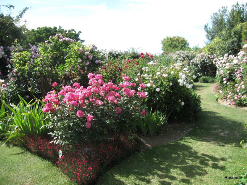 Jardin de morailles 4 photo de le jardin de roses anciennes de morailles pithiviers le for Jardin a visiter