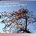 2015.9.chic ! c'est l'automne ! on taille !!!
