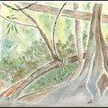 Crique en sous bois mai07