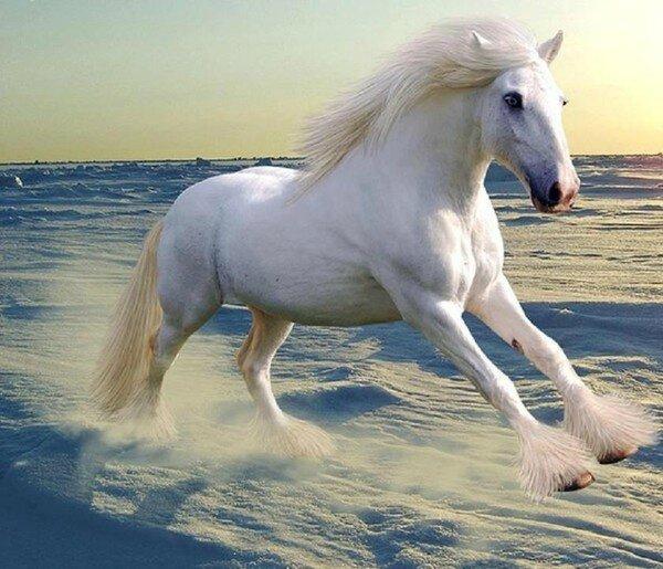 Complainte du petit cheval blanc .