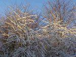 raspo_neige_le_lendemain_11