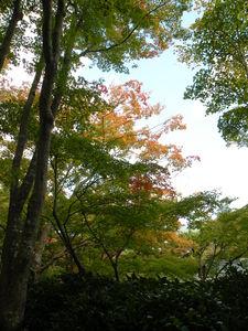 Japon_Kyoto_2009_2001