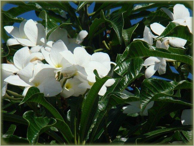 blog_fleurs