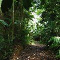 Chemin d'accès à la réserve