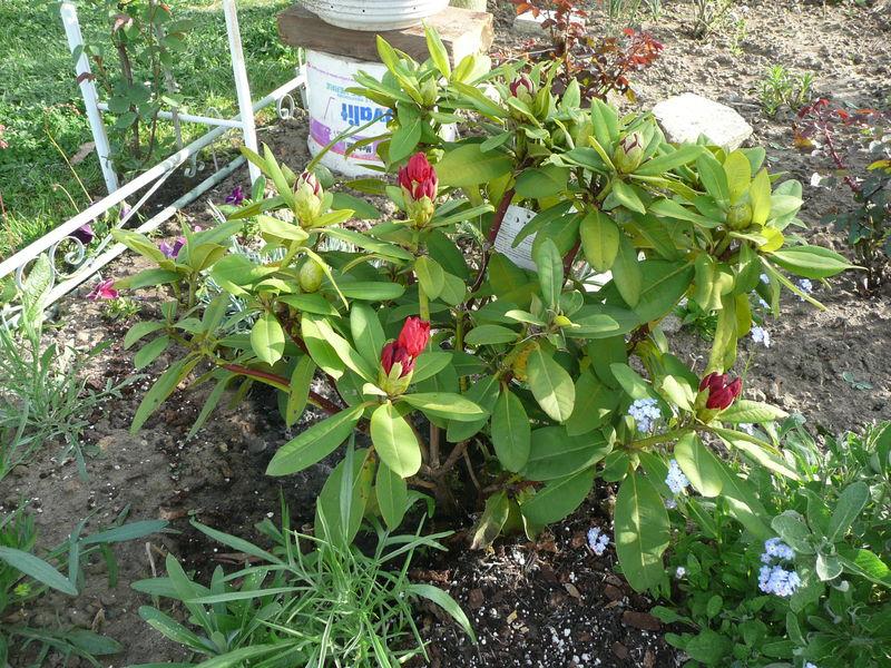 Les fleurs dans les jardins familiaux d 39 ermont le jardin for Fleurs dans le jardin