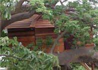 baobab_cabane