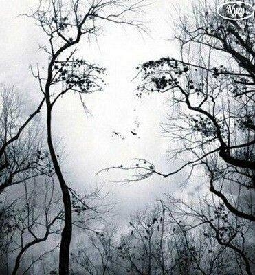 241408visage_de_femme_dans_un_arbre