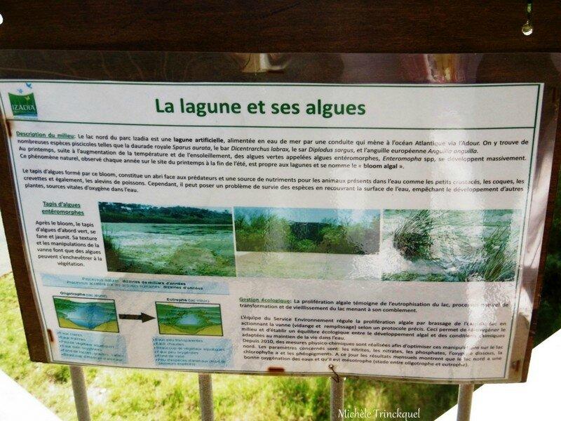 1-Anglet La Barre et Parc Izadia 270917