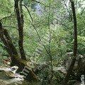 ravin des arcs - sous bois