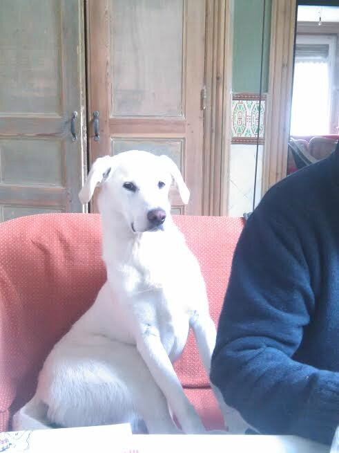 FLORENCE famille d'accueil à Saint Saulve (valenciennes, maubeuge) garde votre chien en famille