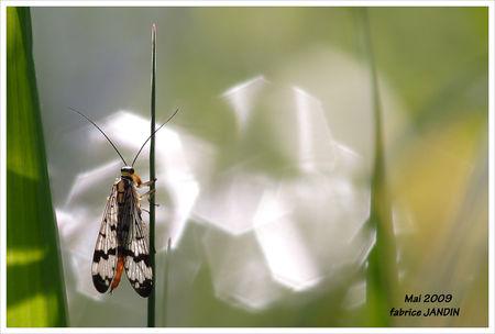 Insecte_et_reflets_rivi_re