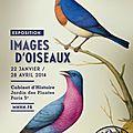 Exposition « images d'oiseaux » : quand l'ornithologie devient un art