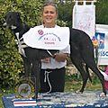 Avis de saillie naissance greyhounds de courses prévue le 24/10/11